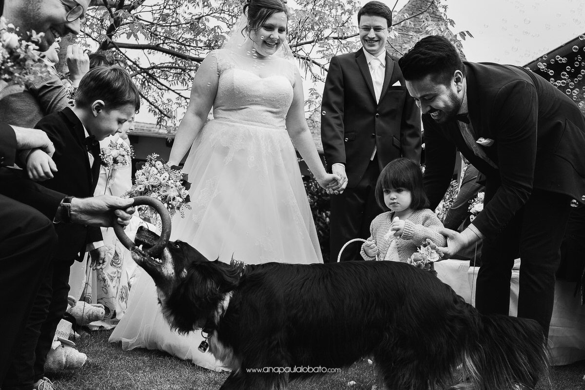 wedding dogs in the ceremony